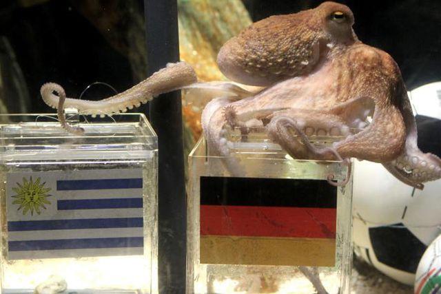 На смерть осьминога Пауля
