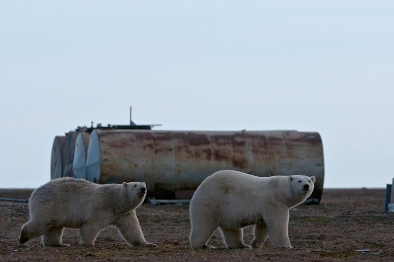 Итоги советского освоения Арктики
