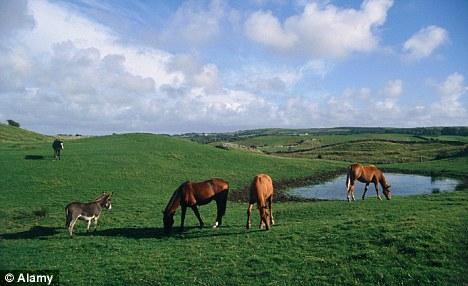 Кризис заставил ирландцев бросить до 100 тысяч лошадей