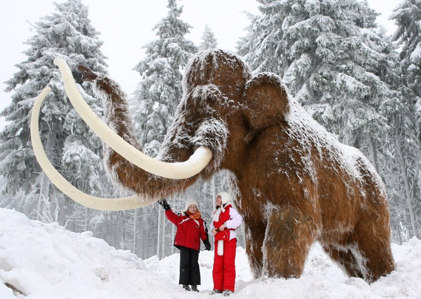 Россия вновь станет родиной слонов