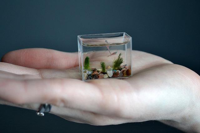 Нанотехнологии по-русски: самый маленький аквариум
