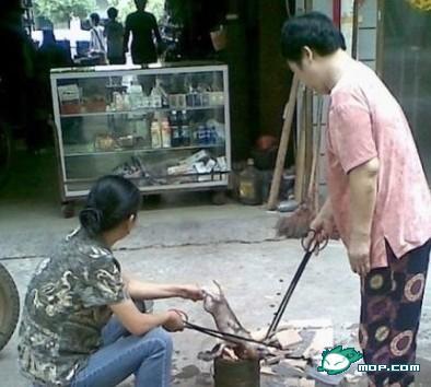 Дикость по-китайски: судьба животных в Поднебесной