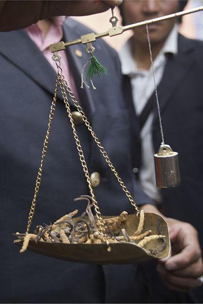 Yarchagumba: самый дорогой «продукт» в мире