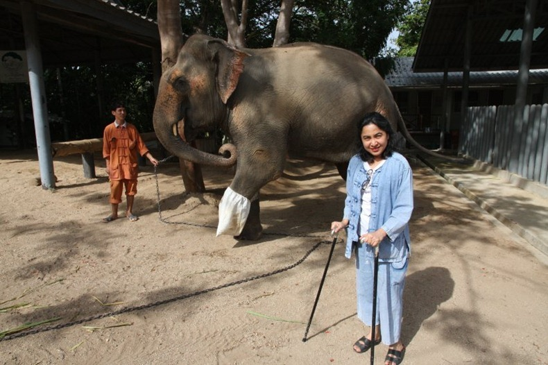 Первый в мире госпиталь для слонов в Таиланде