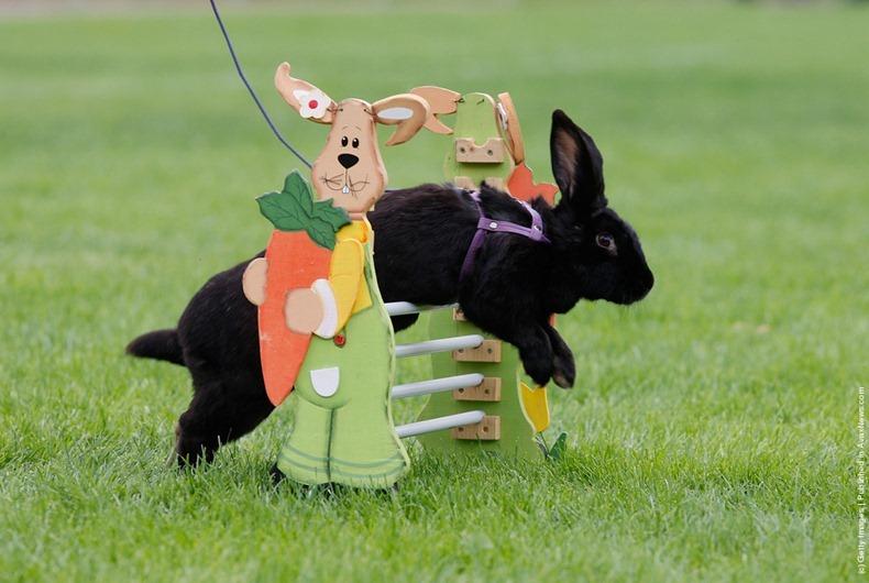 Фото дня: чемпионат кроликов в Германии