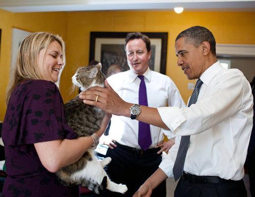 Кошки президентов и премьер-министров