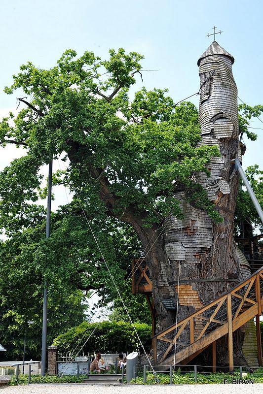 Фото дня: дуб-часовня во Франции