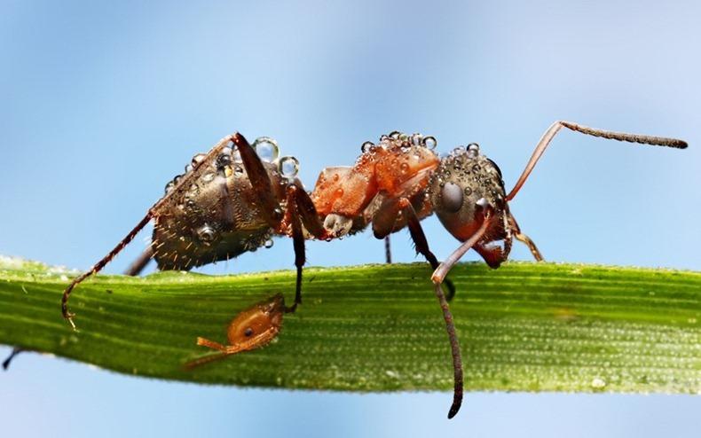 Фото дня: насекомые после дождя