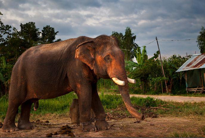 Фото дня: ради чего убивают слонов?