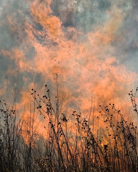 По всей России горит трава: она горит по тебе