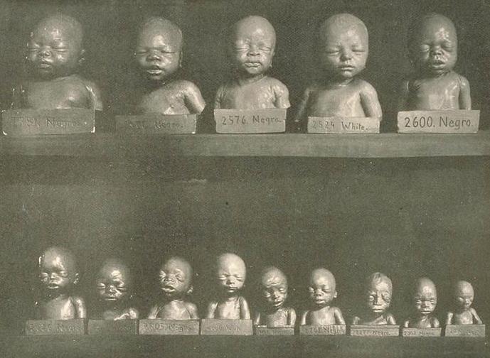 Как прибалты в 1930-е заимствовали евгенику у профессора Шепилевского