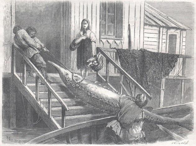 перри-рыба