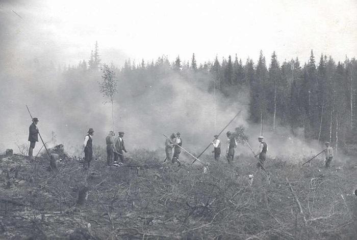 Почему даже в XVIII веке подсечно-огневое земледелие в России оставалось наиболее выгодным?